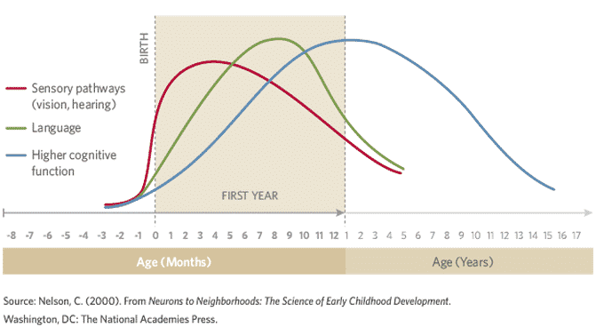 human-brain-development-the-first-5-years1.png